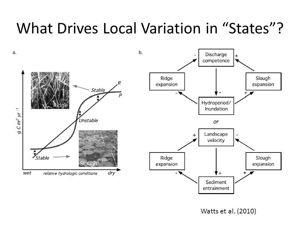 What Drives Local Variation in States Watts et al. (2010)