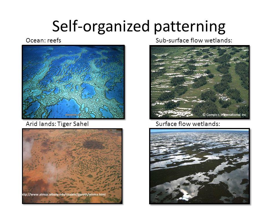 Self-organized patterning http://www.atmos.albany.edu/student/gareth/amma.html © Compics International Inc.