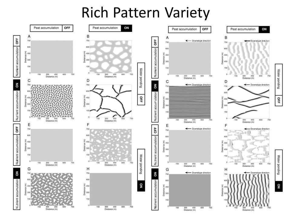 Rich Pattern Variety