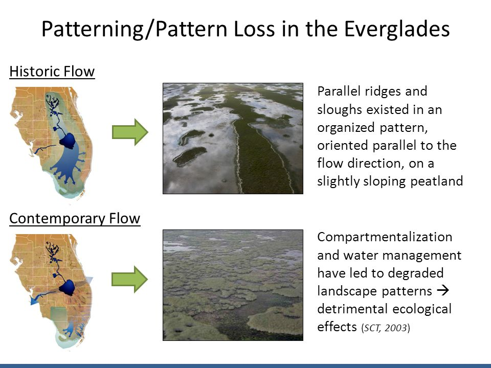 Patterning/Pattern Loss in the Everglades Parallel ridges and sloughs existed in an organized pattern, oriented parallel to the flow direction, on a slightly sloping peatland Compartmentalization and water management have led to degraded landscape patterns  detrimental ecological effects (SCT, 2003) Historic Flow Contemporary Flow