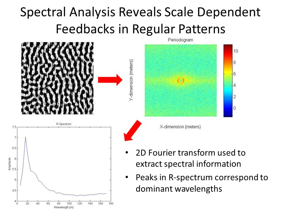 Spectral Analysis Reveals Scale Dependent Feedbacks in Regular Patterns 2D Fourier transform used to extract spectral information Peaks in R-spectrum correspond to dominant wavelengths