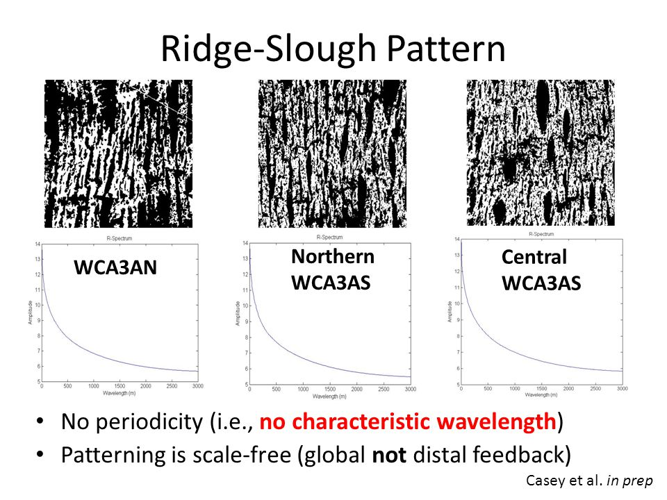 No periodicity (i.e., no characteristic wavelength) Patterning is scale-free (global not distal feedback) Ridge-Slough Pattern WCA3AN Northern WCA3AS Central WCA3AS Casey et al.