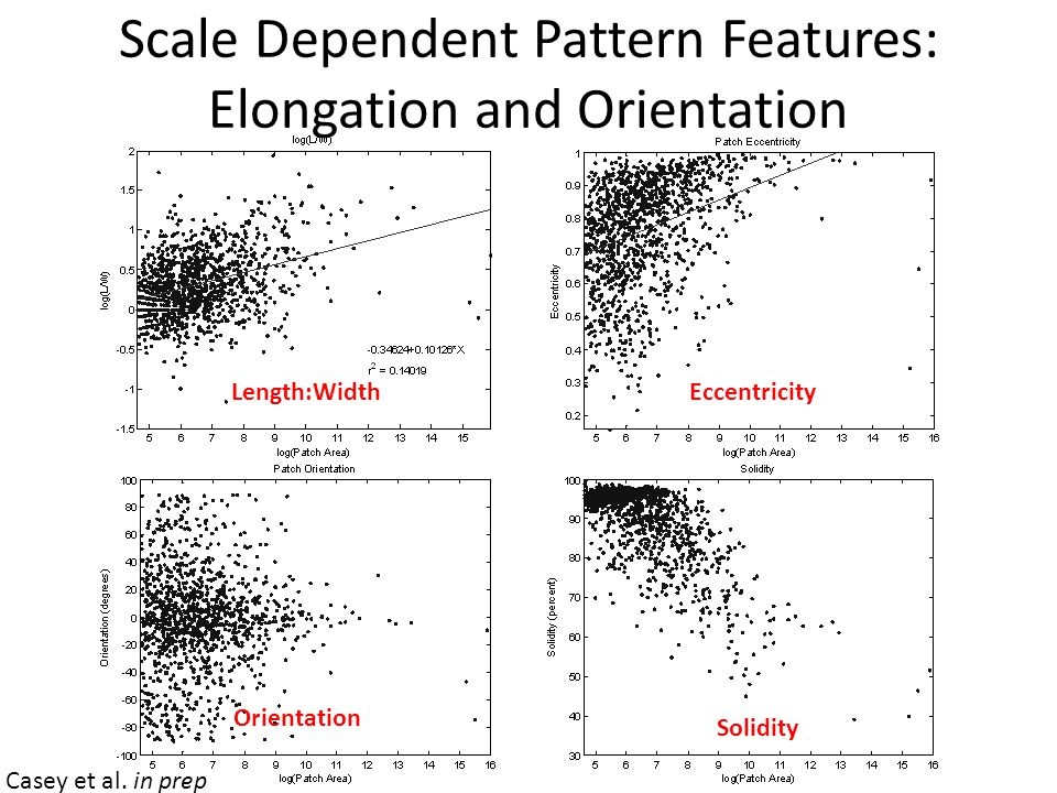 Scale Dependent Pattern Features: Elongation and Orientation Length:WidthEccentricity Orientation Solidity Casey et al.