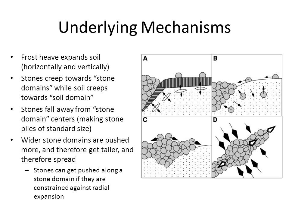 Underlying Mechanisms Frost heave expands soil (horizontally and vertically) Stones creep towards stone domains while soil creeps towards soil domain Stones fall away from stone domain centers (making stone piles of standard size) Wider stone domains are pushed more, and therefore get taller, and therefore spread – Stones can get pushed along a stone domain if they are constrained against radial expansion