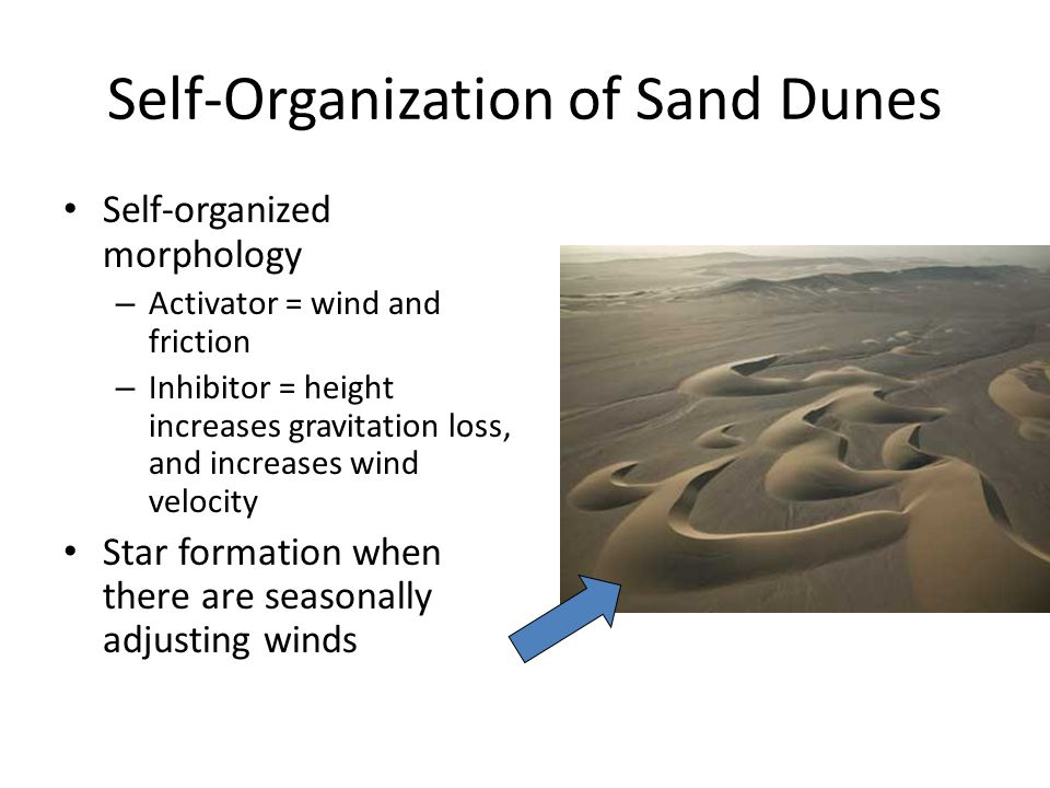 Self-Organization of Sand Dunes Self-organized morphology – Activator = wind and friction – Inhibitor = height increases gravitation loss, and increases wind velocity Star formation when there are seasonally adjusting winds