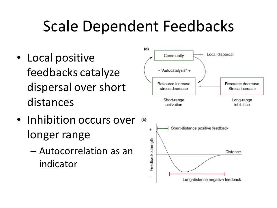 Simulating Scale-Dependent Feedbacks Random initial conditions X-axis increases the strength of the local positive feedback Y-axis decreases the scale of the distal negative feedback Rietkerk et al.