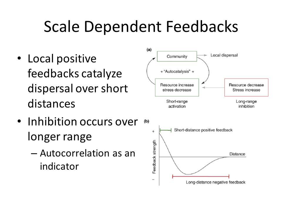 Scale Dependent Feedbacks Local positive feedbacks catalyze dispersal over short distances Inhibition occurs over longer range – Autocorrelation as an indicator Rietkerk and van de Koppel (2008) TREE