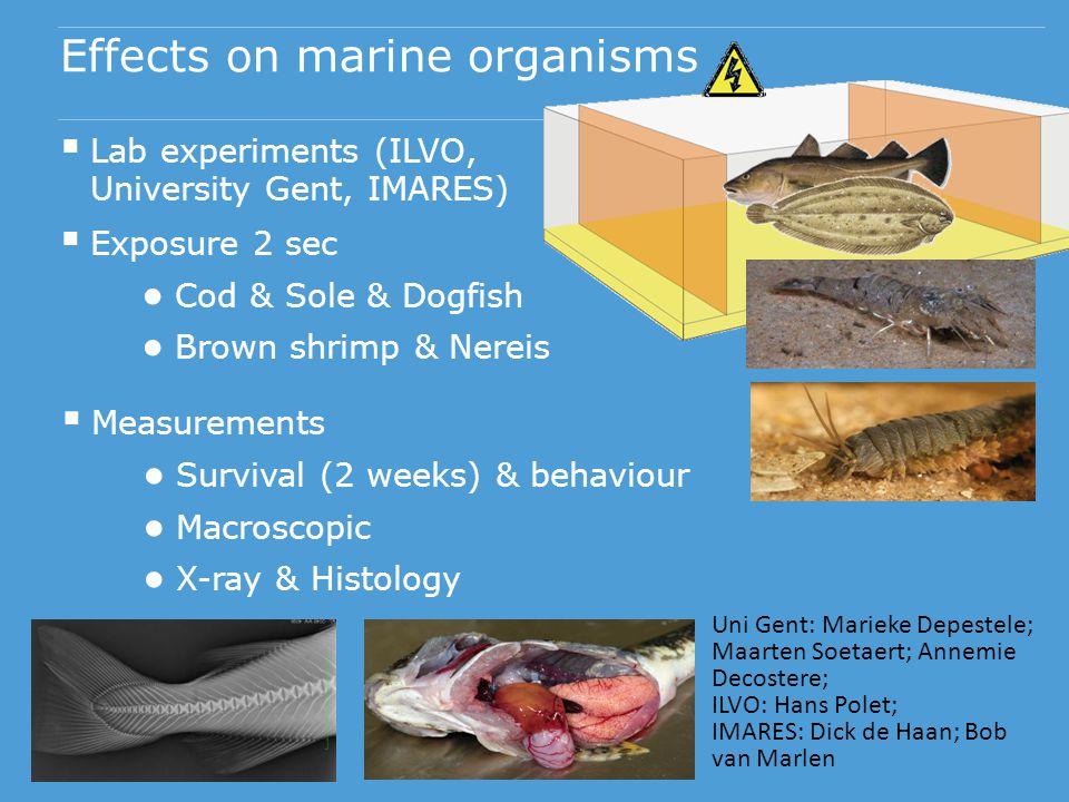 Effects on marine organisms  Lab experiments (ILVO, University Gent, IMARES)  Exposure 2 sec ● Cod & Sole & Dogfish ● Brown shrimp & Nereis  Measur