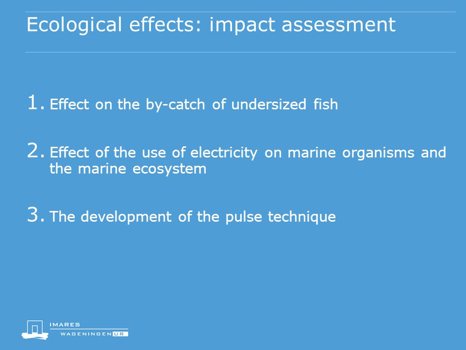 Ecological effects: impact assessment 1. Effect on the by-catch of undersized fish 2.