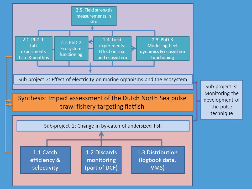 Synthesis: Impact assessment of the Dutch North Sea pulse trawl fishery targeting flatfish Sub-project 3: Monitoring the development of the pulse technique Sub-project 1: Change in by-catch of undersized fish 1.3 Distribution (logbook data, VMS) 1.1 Catch efficiency & selectivity 1.2 Discards monitoring (part of DCF) 2.1.