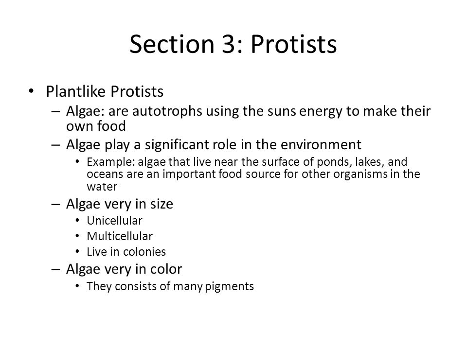 Section 3: Protists Plantlike Protists – Algae: are autotrophs using the suns energy to make their own food – Algae play a significant role in the environment Example: algae that live near the surface of ponds, lakes, and oceans are an important food source for other organisms in the water – Algae very in size Unicellular Multicellular Live in colonies – Algae very in color They consists of many pigments
