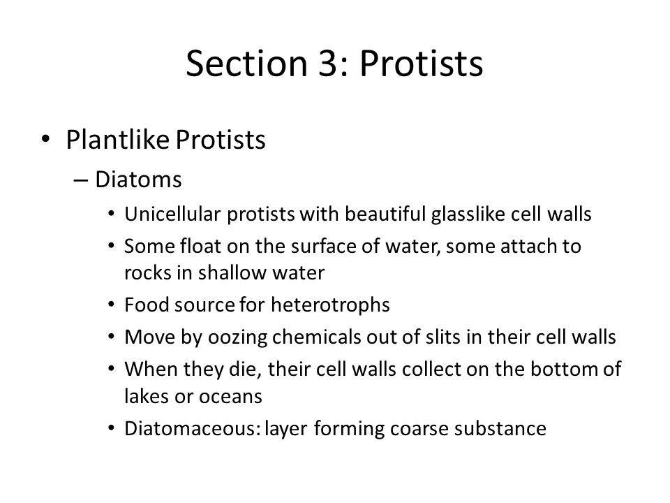 Section 3: Protists Plantlike Protists – Diatoms Unicellular protists with beautiful glasslike cell walls Some float on the surface of water, some attach to rocks in shallow water Food source for heterotrophs Move by oozing chemicals out of slits in their cell walls When they die, their cell walls collect on the bottom of lakes or oceans Diatomaceous: layer forming coarse substance