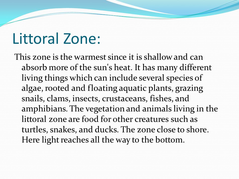 Littoral Zone: This zone is the warmest since it is shallow and can absorb more of the sun's heat. It has many different living things which can inclu