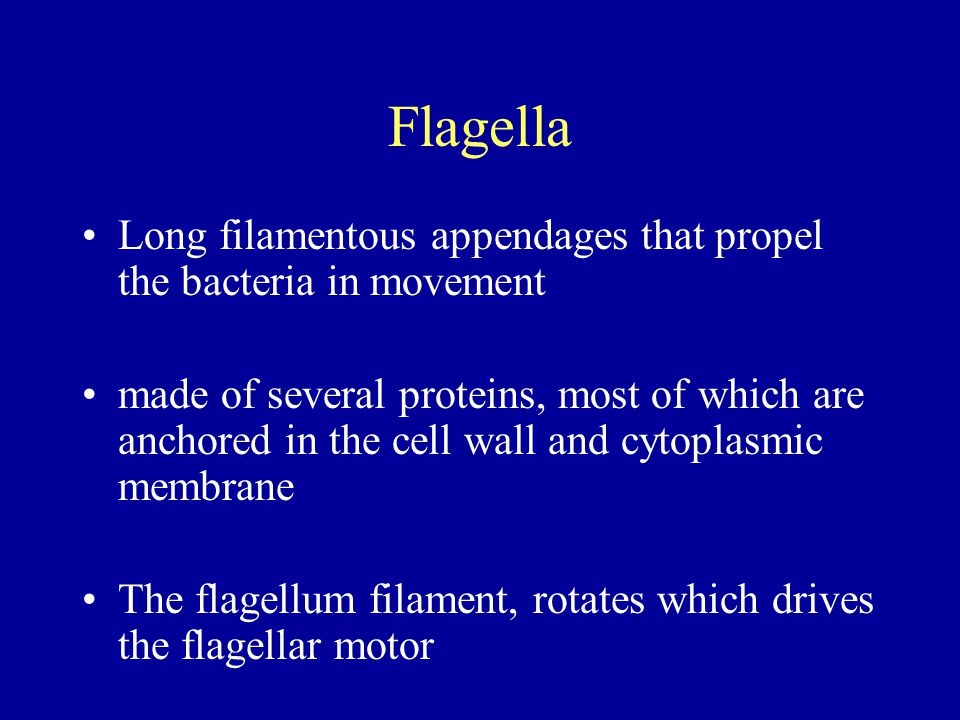 Flagella Long filamentous appendages that propel the bacteria in movement made of several proteins, most of which are anchored in the cell wall and cy