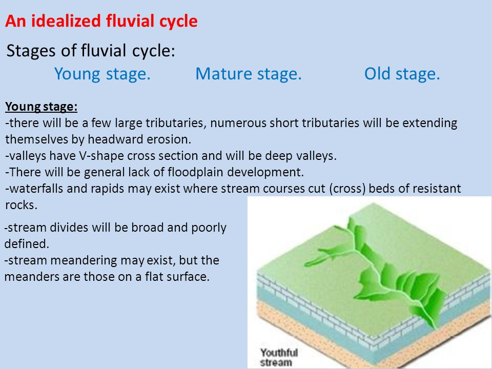 An idealized fluvial cycle Stages of fluvial cycle: Young stage. Mature stage. Old stage. Young stage: -there will be a few large tributaries, numerou