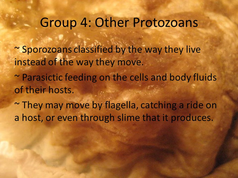 Group 4: Other Protozoans ~ Sporozoans classified by the way they live instead of the way they move.