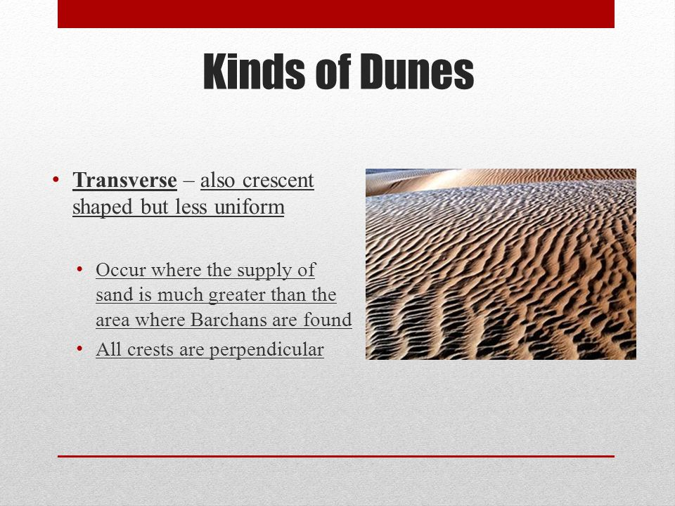 Transverse – also crescent shaped but less uniform Occur where the supply of sand is much greater than the area where Barchans are found All crests ar