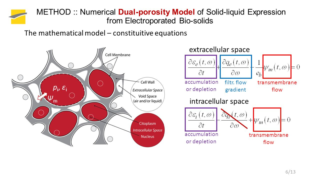 6/13 extracellular space METHOD :: Numerical Dual-porosity Model of Solid-liquid Expression from Electroporated Bio-solids The mathematical model – constituitive equations accumulation or depletion filtr.