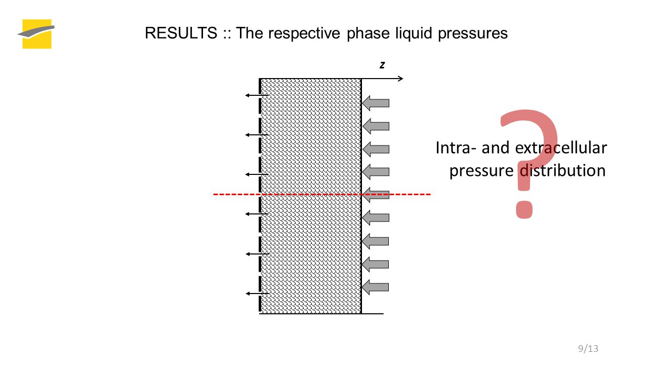 RESULTS :: The respective phase liquid pressures z Intra- and extracellular pressure distribution .