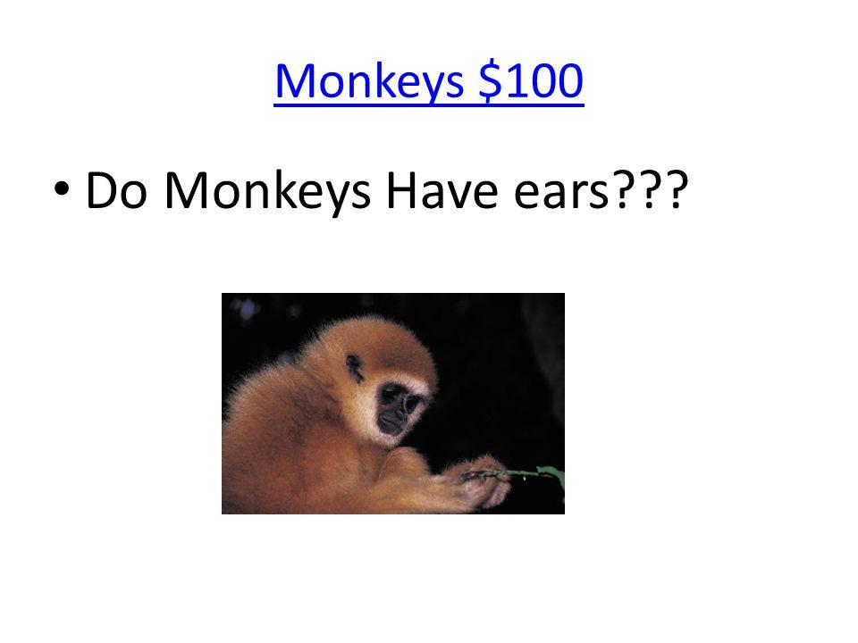 Monkeys $100 Do Monkeys Have ears???