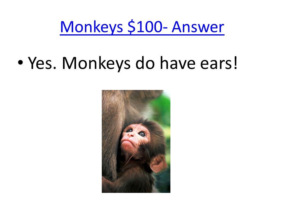Monkeys $100- Answer Yes. Monkeys do have ears!