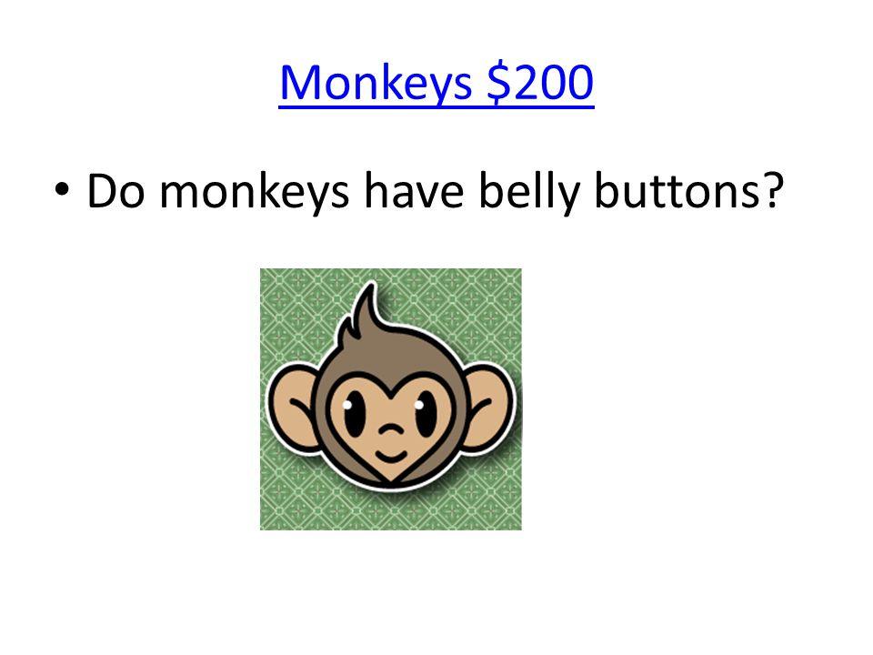 Monkeys $200 Do monkeys have belly buttons?