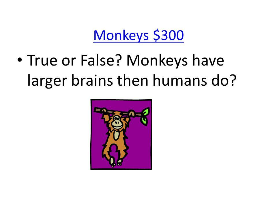 Monkeys $300 True or False? Monkeys have larger brains then humans do?