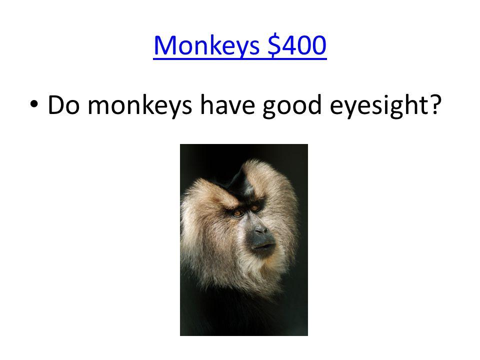 Monkeys $400 Do monkeys have good eyesight?