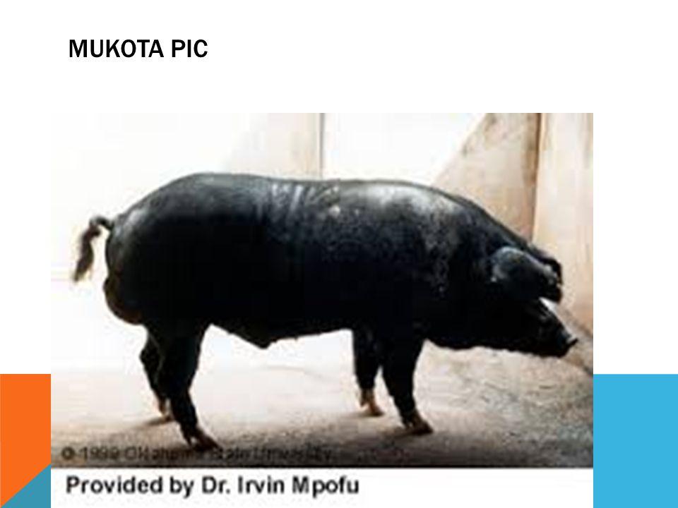 MUKOTA PIC