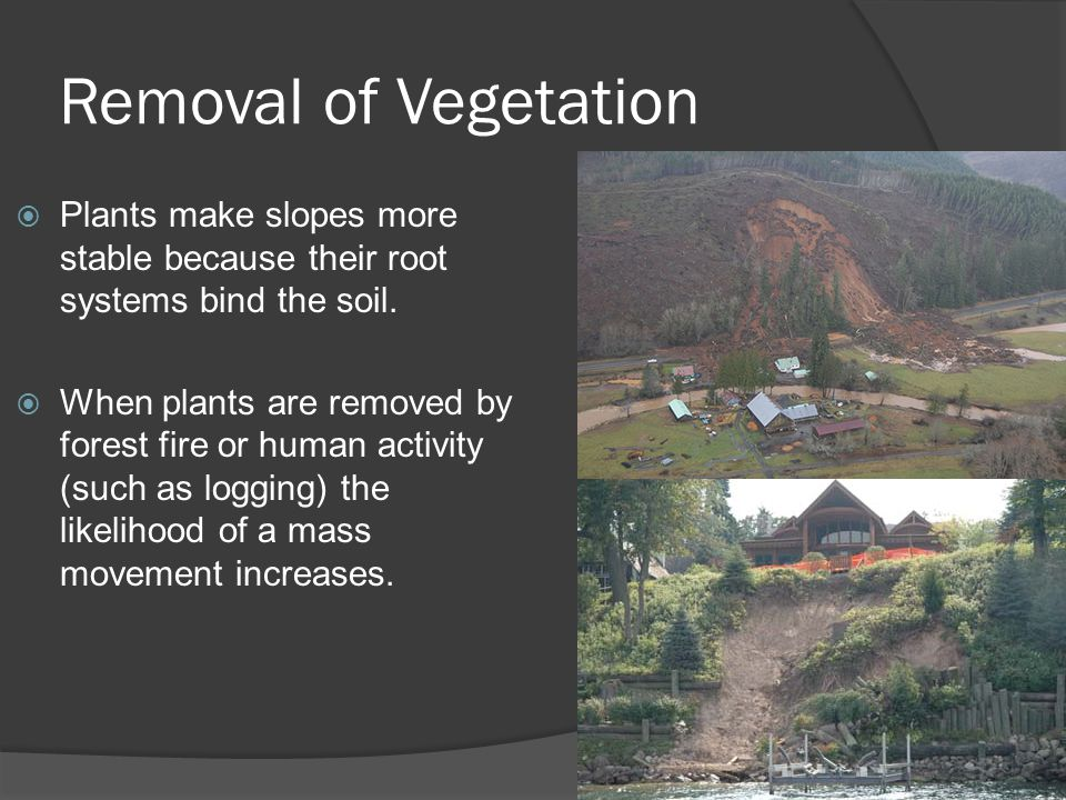 Removal of Vegetation  Plants make slopes more stable because their root systems bind the soil.  When plants are removed by forest fire or human act