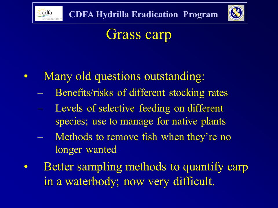 CDFA Hydrilla Eradication Program Grass carp Many old questions outstanding: –Benefits/risks of different stocking rates –Levels of selective feeding on different species; use to manage for native plants –Methods to remove fish when they're no longer wanted Better sampling methods to quantify carp in a waterbody; now very difficult.