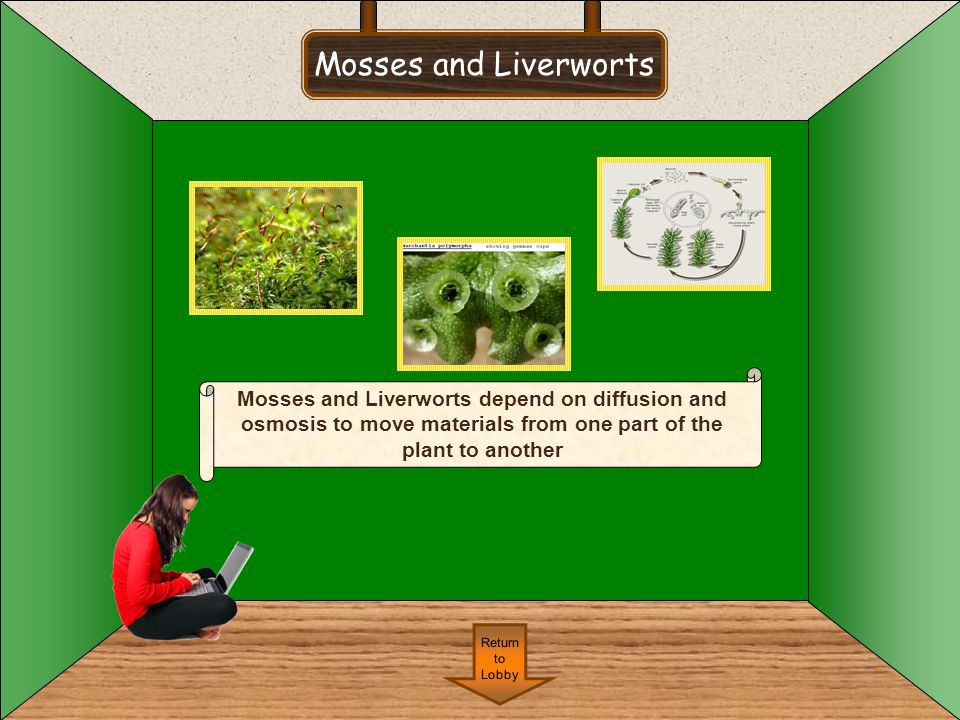Mosses and Liverworts Return to Lobby Mosses and Liverworts depend on diffusion and osmosis to move materials from one part of the plant to another