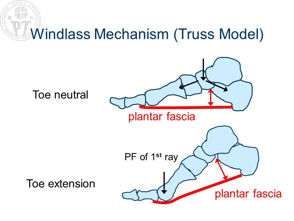 Windlass Mechanism (Truss Model) Toe neutral Toe extension plantar fascia PF of 1 st ray