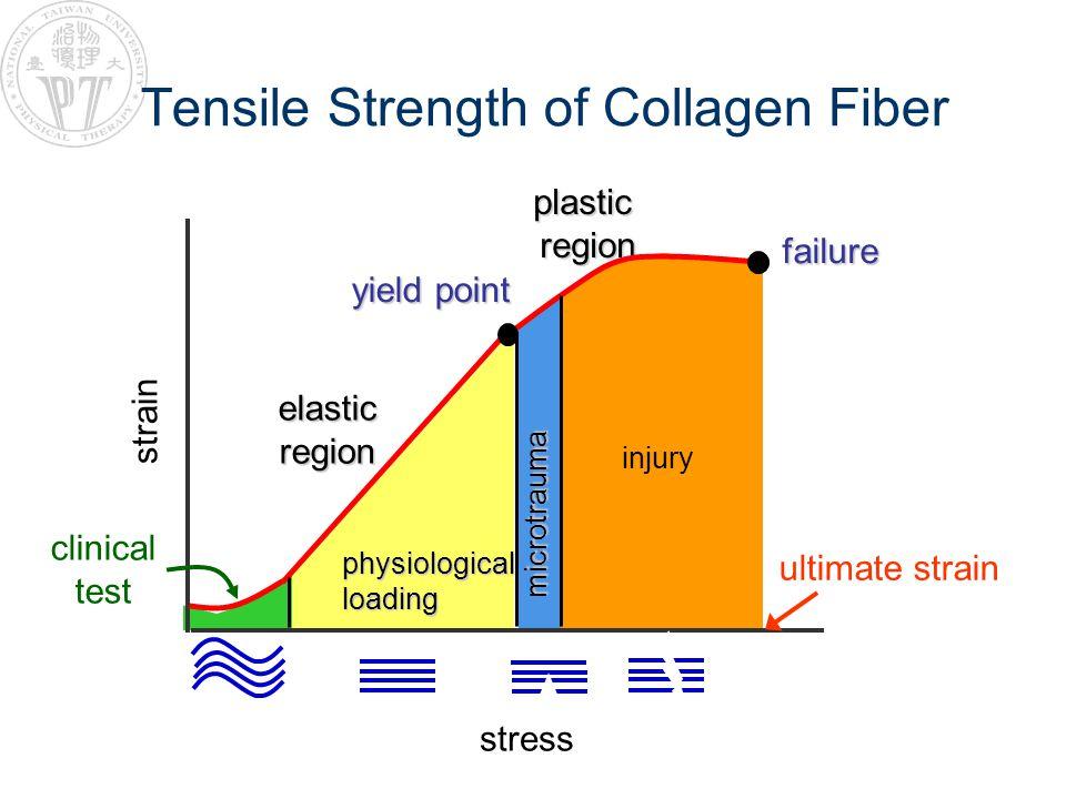 Tensile Strength of Collagen Fiber stress strain plasticregion elasticregion injury microtrauma physiologicalloading failure yield point clinical test