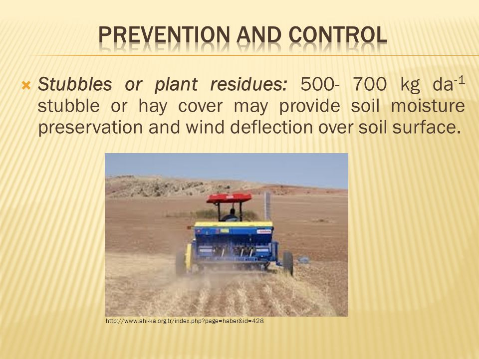  Stubbles or plant residues: 500- 700 kg da -1 stubble or hay cover may provide soil moisture preservation and wind deflection over soil surface.