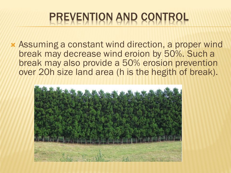  Assuming a constant wind direction, a proper wind break may decrease wind eroion by 50%.