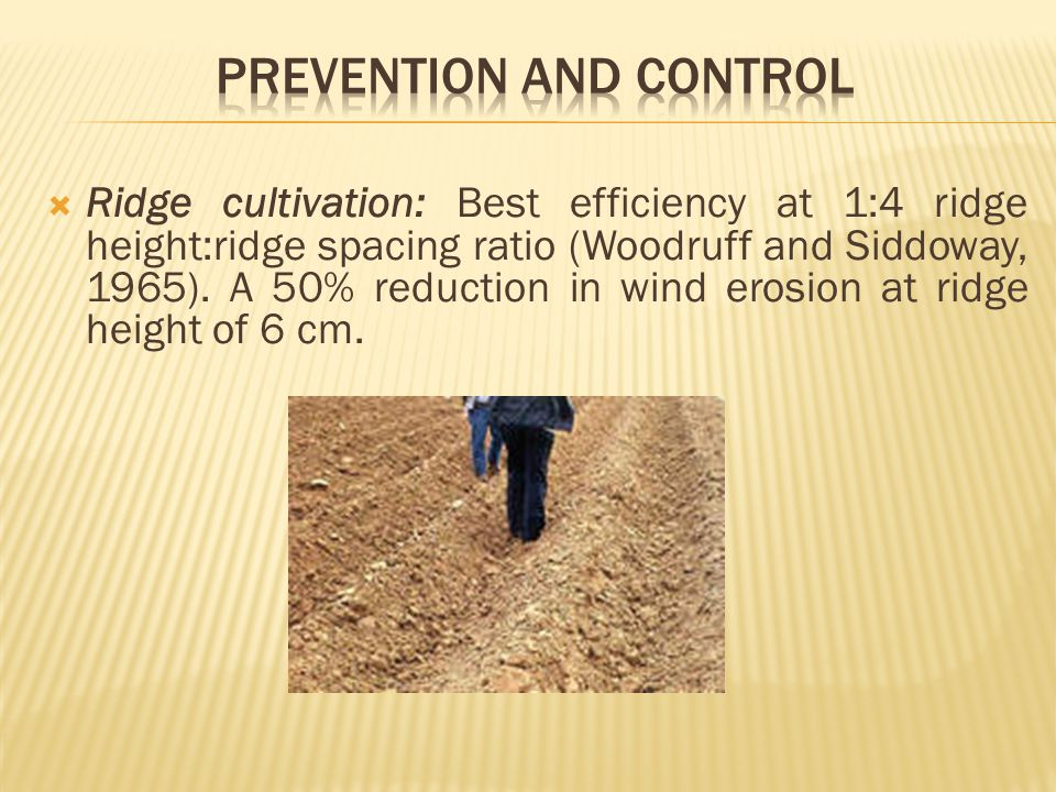  Ridge cultivation: Best efficiency at 1:4 ridge height:ridge spacing ratio (Woodruff and Siddoway, 1965).