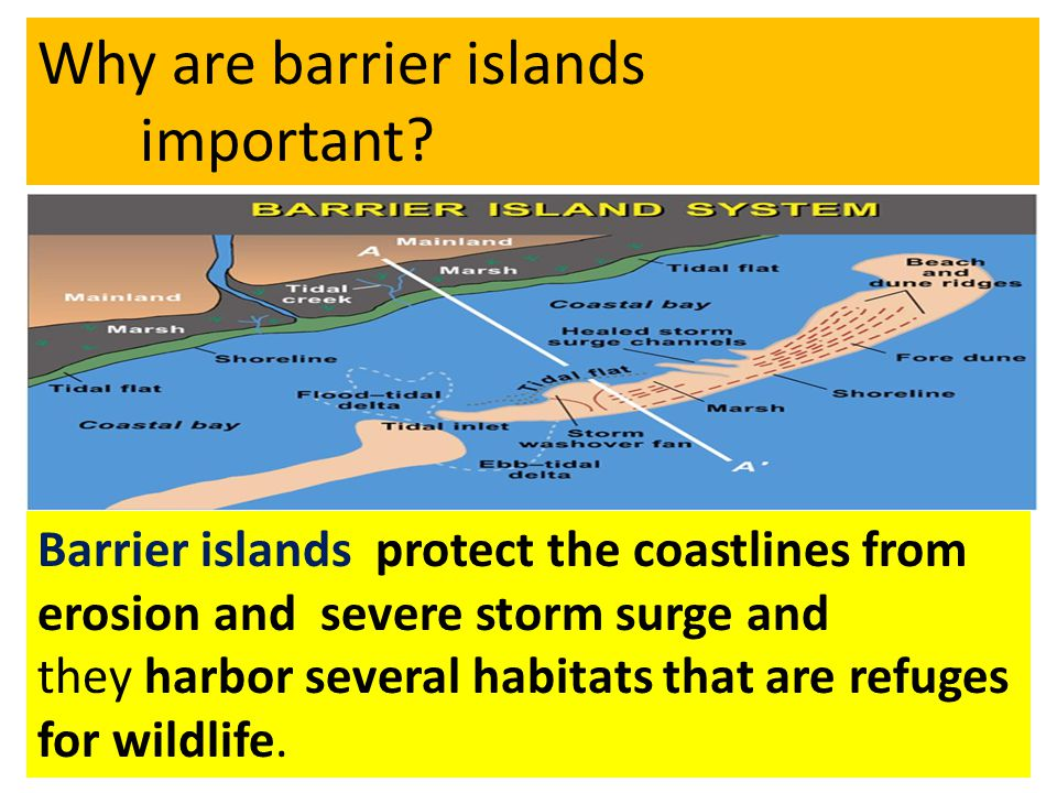 Barrier islands protect the coastlines from erosion and severe storm surge and they harbor several habitats that are refuges for wildlife. Why are bar