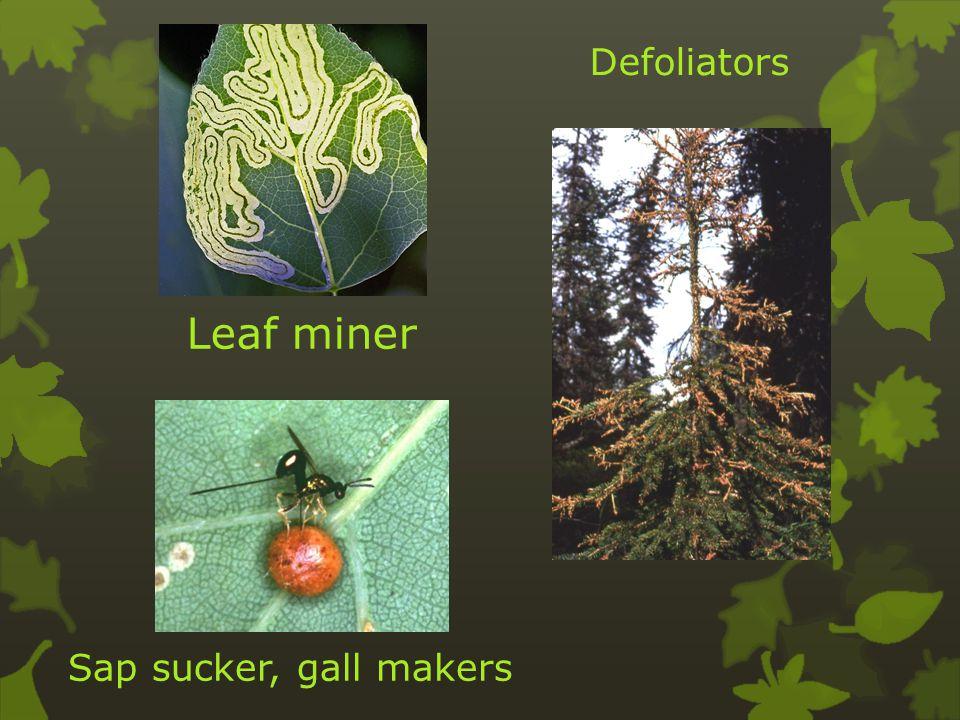 Leaf miner Sap sucker, gall makers Defoliators