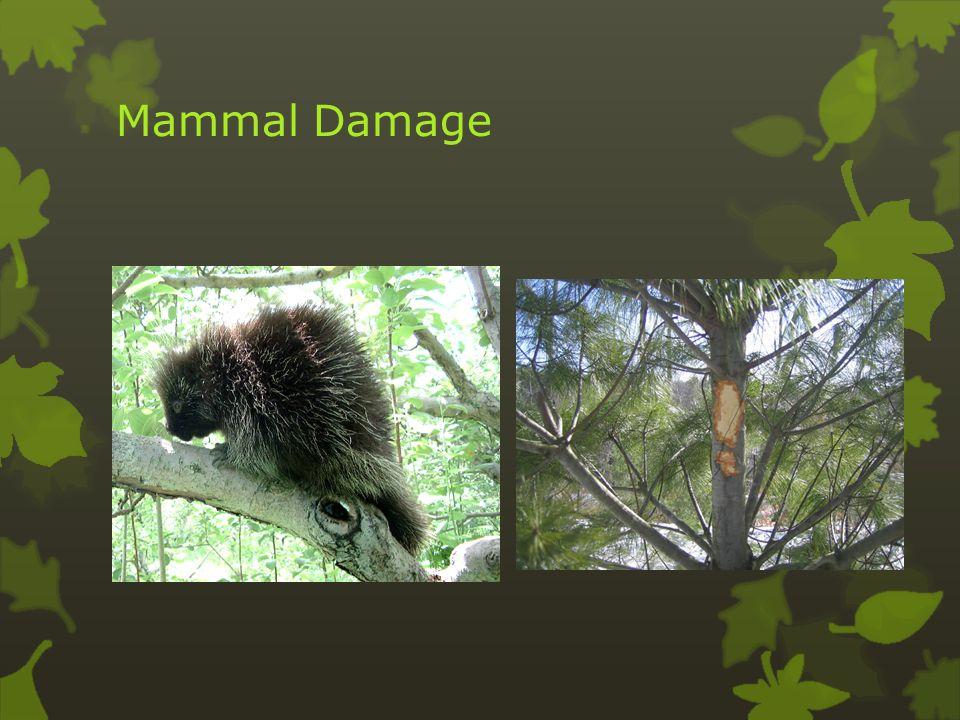 Mammal Damage