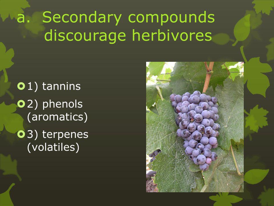 a. Secondary compounds discourage herbivores  1) tannins  2) phenols (aromatics)  3) terpenes (volatiles)