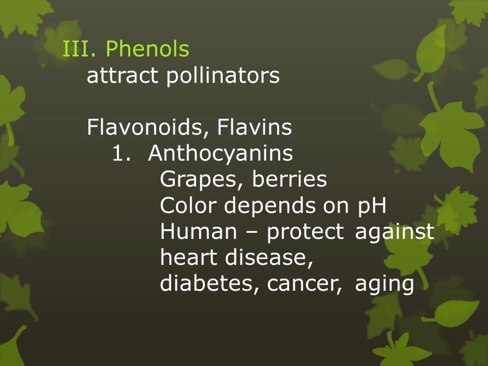 III. Phenols attract pollinators Flavonoids, Flavins 1.