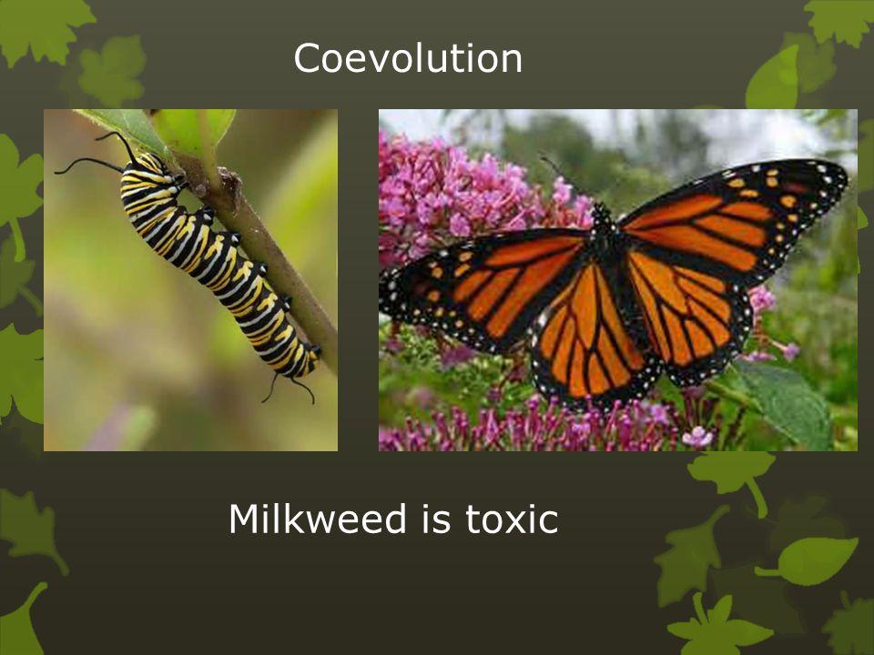 Coevolution Milkweed is toxic