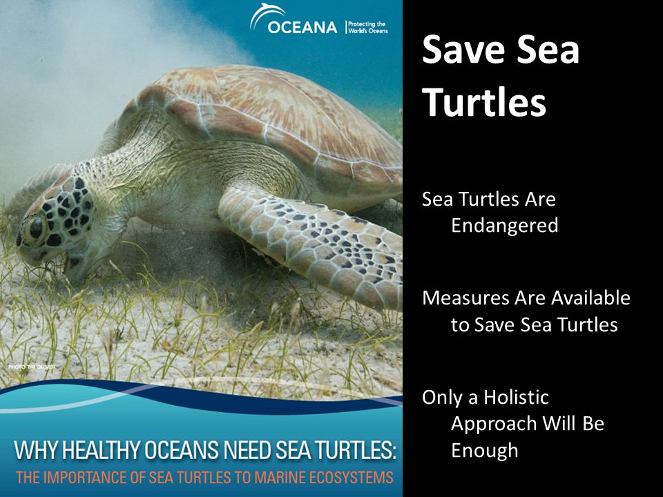 Save Sea Turtles Sea Turtles Are Endangered Measures Are Available to Save Sea Turtles Only a Holistic Approach Will Be Enough