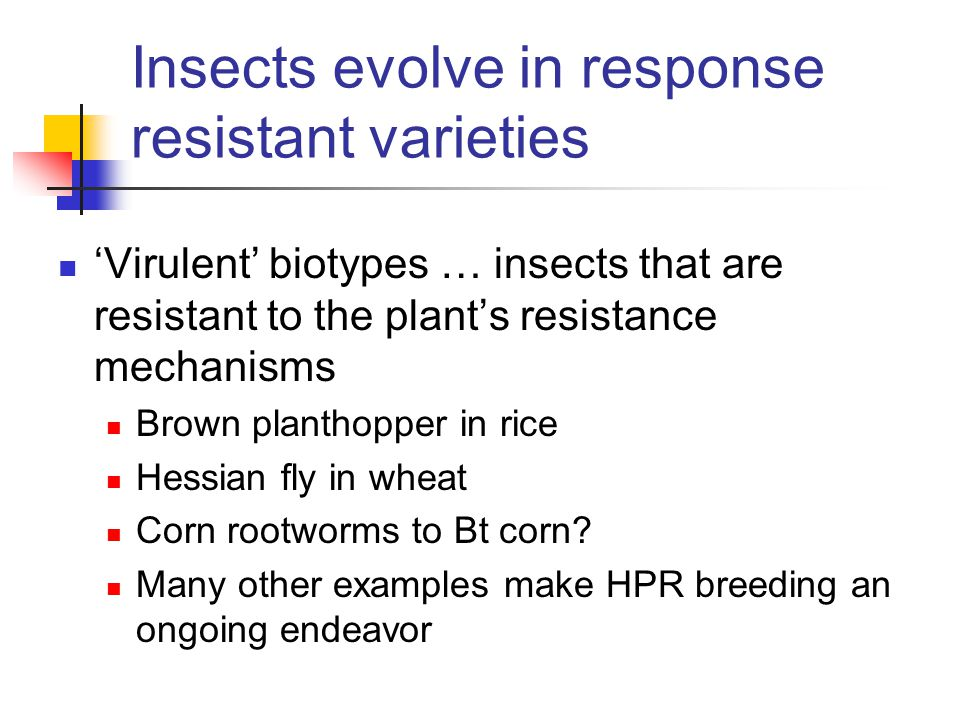 Insects evolve in response resistant varieties 'Virulent' biotypes … insects that are resistant to the plant's resistance mechanisms Brown planthopper in rice Hessian fly in wheat Corn rootworms to Bt corn.