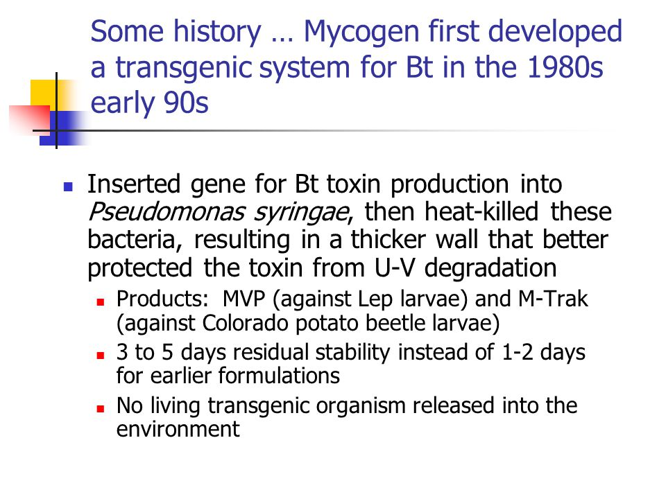 Some history … Mycogen first developed a transgenic system for Bt in the 1980s early 90s Inserted gene for Bt toxin production into Pseudomonas syringae, then heat-killed these bacteria, resulting in a thicker wall that better protected the toxin from U-V degradation Products: MVP (against Lep larvae) and M-Trak (against Colorado potato beetle larvae) 3 to 5 days residual stability instead of 1-2 days for earlier formulations No living transgenic organism released into the environment