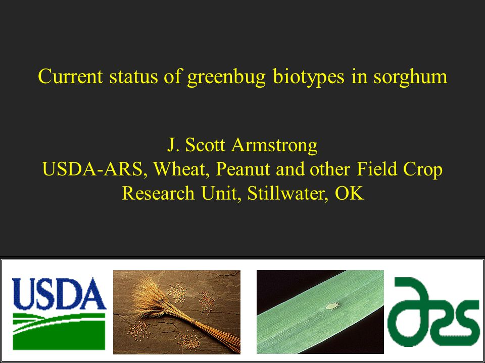 Current status of greenbug biotypes in sorghum J. Scott Armstrong USDA-ARS, Wheat, Peanut and other Field Crop Research Unit, Stillwater, OK