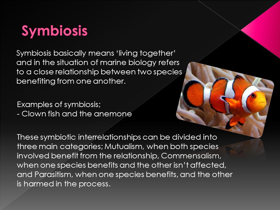 There is a fourth, a more behind the scenes idea of symbiosis known as Mimicry.