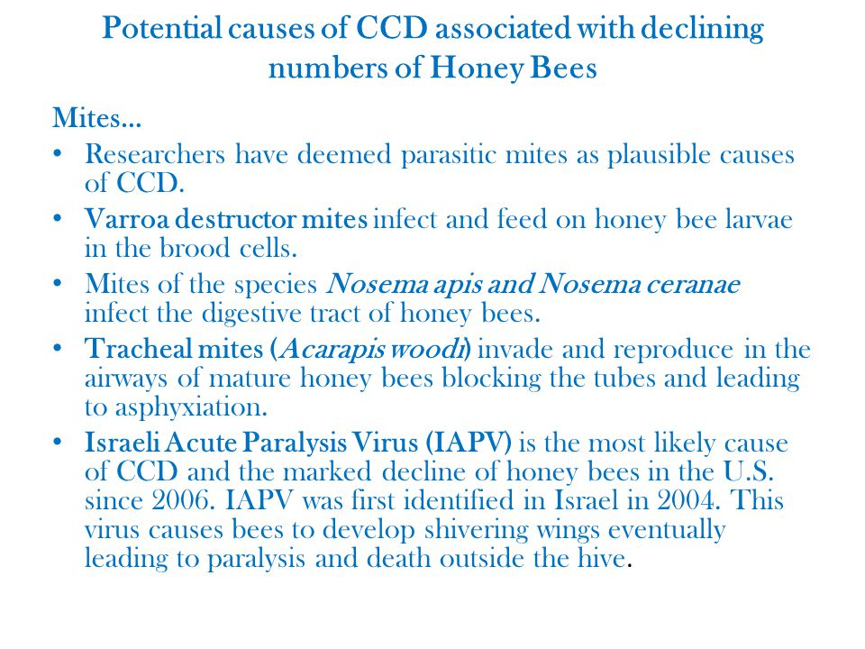 Potential causes of CCD associated with declining numbers of Honey Bees Mites… Researchers have deemed parasitic mites as plausible causes of CCD.