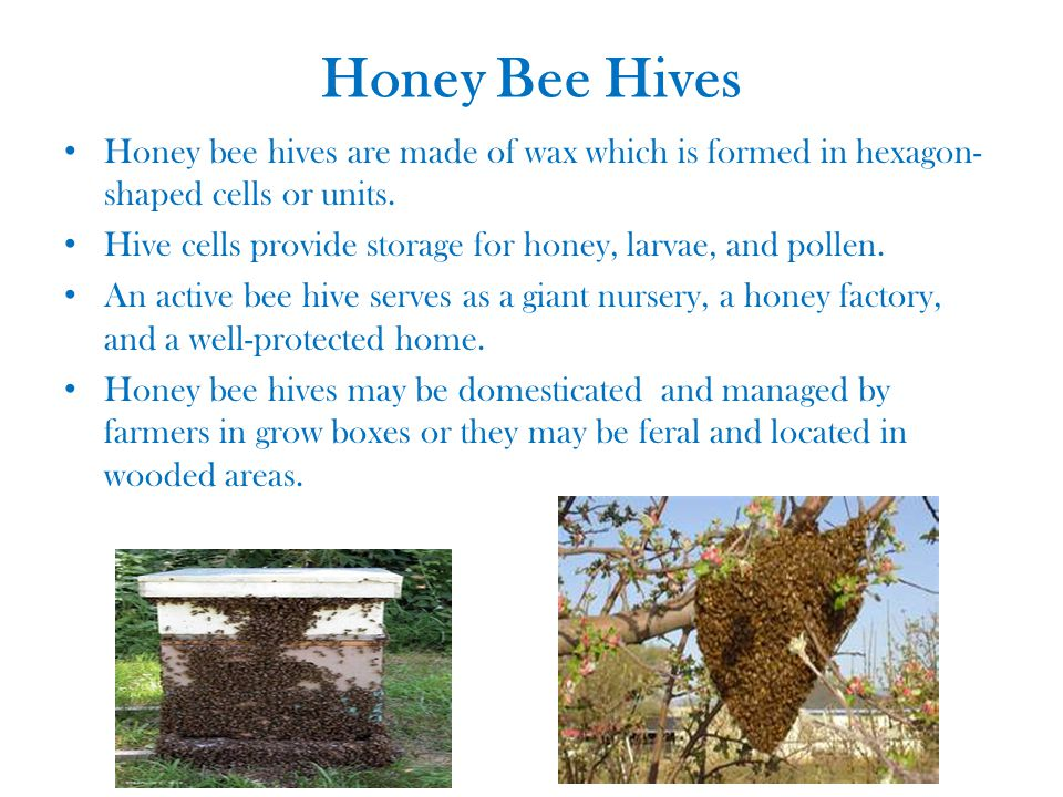 Honey Bee Hives Honey bee hives are made of wax which is formed in hexagon- shaped cells or units.